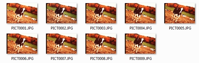 ion film2sd many cows
