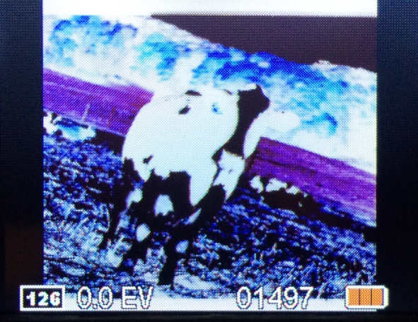 ion film2sdplus cow 126neg1