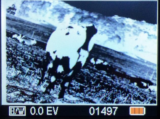 ion film2sdplus cow 135bw1